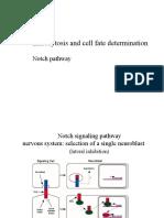 Endocytosis and Signaling 08 11