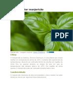 Como plantar manjericão.docx