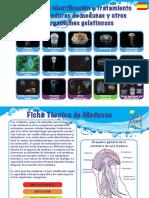 Guia Sobre Medusas
