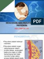 PPT Fartoks 4 KLP 7
