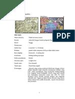 Deskriptif Mineral Optik