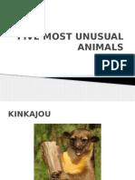 Five Most Unusual Animals 2007