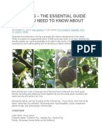 Dig the Fig – the Essential Guide to All You Need to Know About Figs