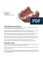 Tooth Structures Revison Notes