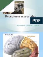 Fis. Sensorial p