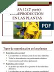 12_reproduccion_plantas