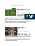 Listado de Reptiles de Nicaragua