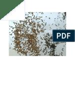 Chia Seed vs Basil Seed