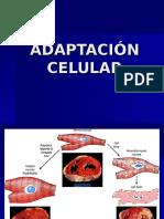 3. Adaptación Celular