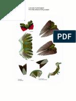 Template Hummingbird Life Size