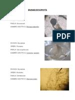 Division Mycophyta