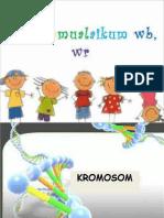 kelompok 6 kromosom