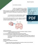 UI-T2. Guía. Configuración externa del cerebro