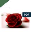 Roses PDF Doct