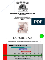 FISIOLOGIA MASCULINA