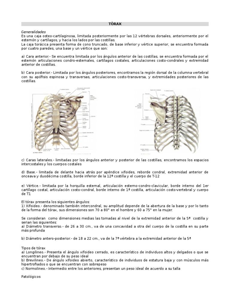 Tórax+1a+..[1]