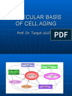 Molecular Basis of Cell Aging
