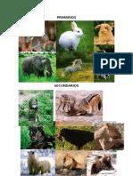 Organismos Primarios, Secundarios, Terciarios y Descomponedores