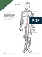 inside-out-anatomy-cardiovascular.pdf