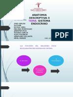 Anatomia Sistema Endocrino