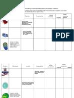 Actividad Estructura y Funcion Celular
