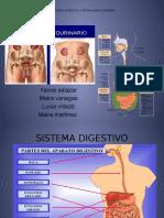 Sistema Digestivo y Genitourinario