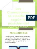 cromosomas clsasificacion