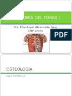 Anatomía Del Tórax