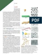Lecturas Apoyo Estructura Bacteriana