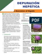 Articulo Depuracion Hepatica 04