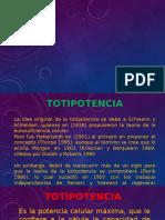 Expo Totipotencia