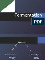 fermentation ms