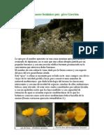 Breve paseo botánico por pico gorrion