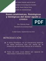 Bases Neurofisiopatologicas Del Dolor