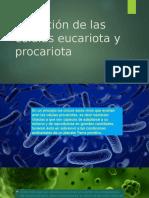 Evolución de Las Células Eucariota y Procariota