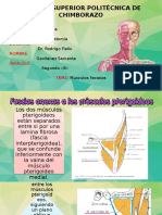 Fascias Anexas a Los Músculos Pterigoideos