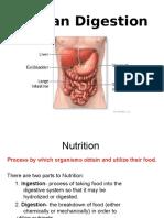 TheDigestiveSystem.ppt