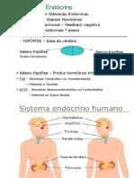 Sistema Endócrino Slides