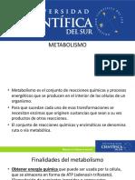 METABOLISMO CELULAR..pdf
