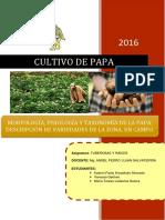 CULTIVO DE PAPA EN EL PERÚ