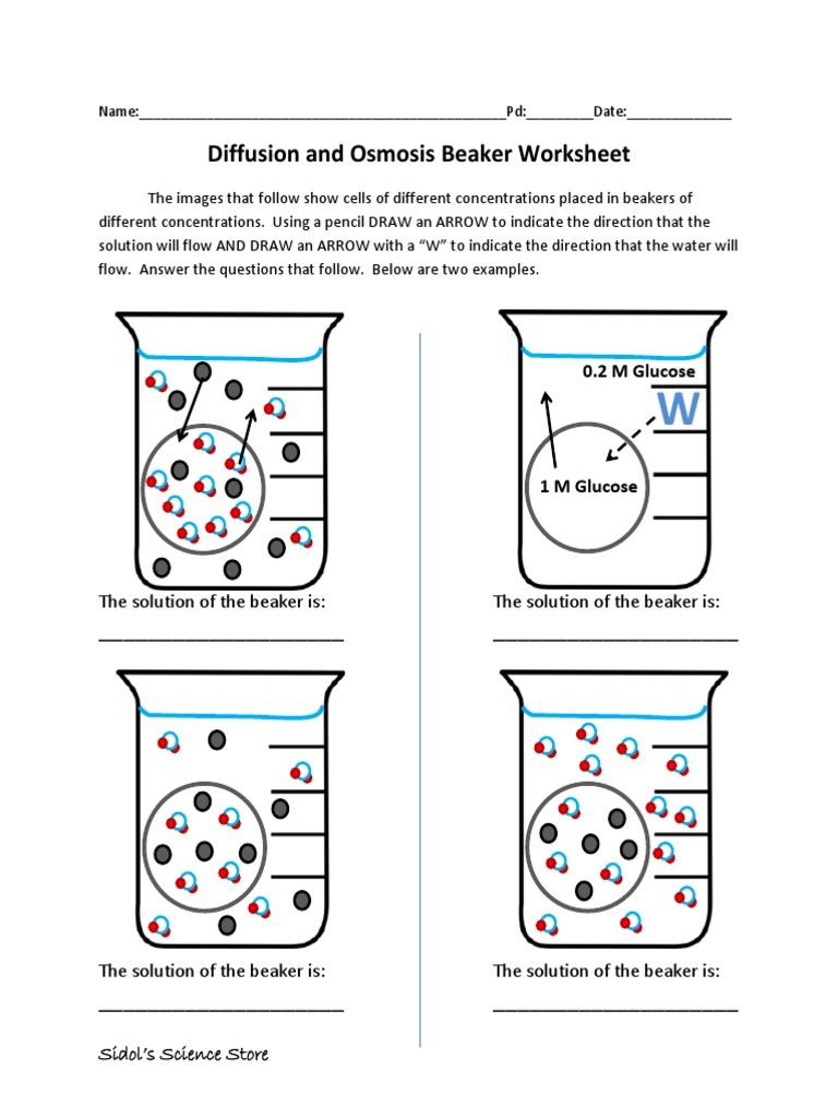 worksheet Osmosis Worksheet Answer Key osmosis and diffusion worksheet