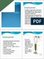 Briófitos