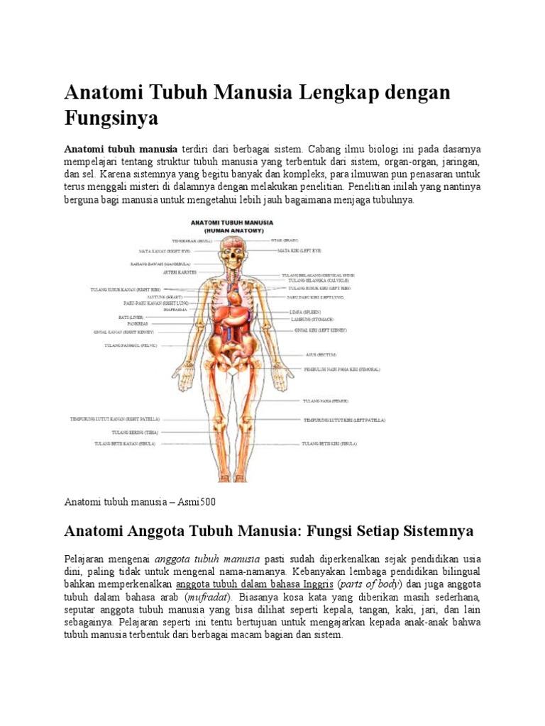 Struktur Dan Fungsi Anatomi Tubuh Manusia