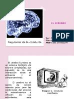 El Cerebro, Procesos 1
