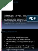 Ceratophyllales