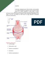 Caso Clinico de Autoinmunidad Inmundeficiencias y Hipesnesibilad I II y IV