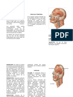 Triptico - Musculo Temporal