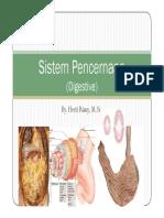 Sistem Pencernaann human