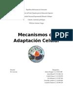 Mecanismos de Adaptacion Celular.