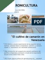 Cultivos Acuaticos 6 Camaronicultura